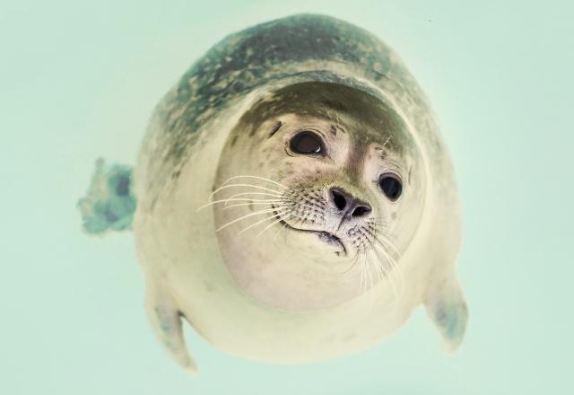 sea-animal-dog-zoo-23087